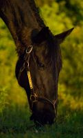 Lacey: Wake After the Storm I by LandOfStandardbreds