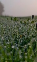 Morningdew 2 by Moonbird9