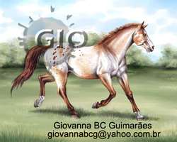 Appaloosa Horse by giovannag