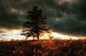 Autumn Ferns on Fire by IraMustyPhotography