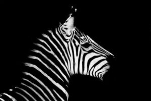 Black with white stripes. by feudal89