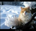 Cats Love Winter by gatis-vilaks