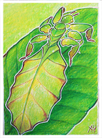 ACEO-Leaf Insect by soulwithin465