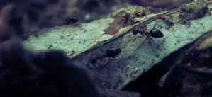Busy Ants by menono-art