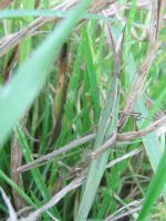 Hey I'm Not A Stick Insect by Piombo