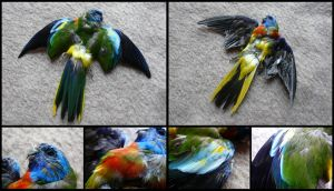 Turquoise Parrot Skin by CabinetCuriosities
