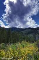 Clouds Over Sunflowers by mjohanson