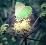 Butter Fly by Photomarie000