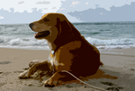 romeo on the ocracoke beach 2 by icehippie