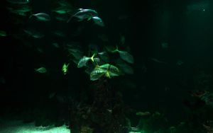 The Deep - Tropical Fish Wall by wrenchy