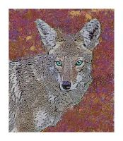 Blue eyed Coyote by Zyteche