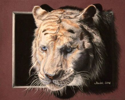 White Tiger - 3D illusion / Tigre blanc - Effet 3D by May84