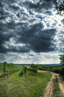 Vineyards and Journeys by FilipR8