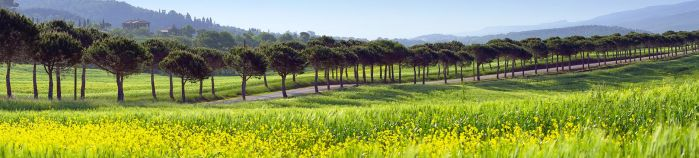 Tuscan Road 2 by CitizenFresh