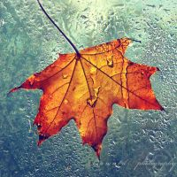 autumn leaf by Orwald