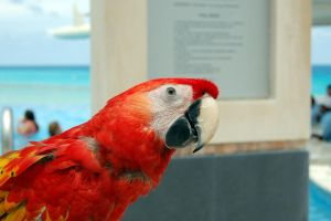 Red Parrot by Dominick-AR