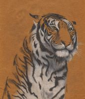 Tiger portrait by fatboygotsick