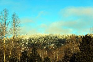 frost pine mountain by Abbiee1211