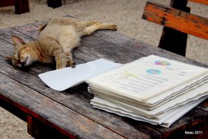 Cat on the Menu by BeauNestor