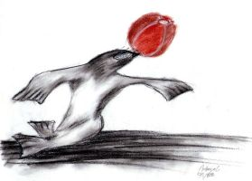 Seal with a ball by Andrayah