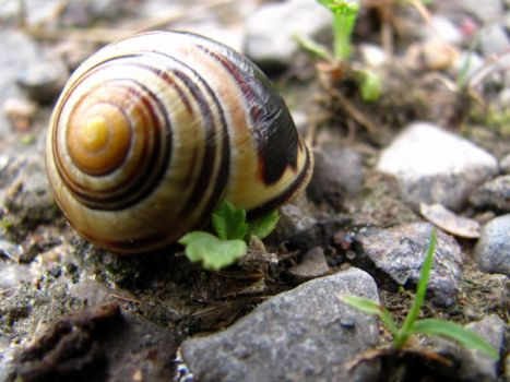 Snail 3. by Rainbow-Satisfaction