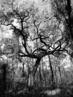 Swamp Tree in b and w by Heidipickels