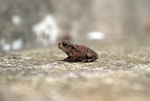 DSC06674 Toad 4 by wintersmagicstock
