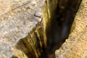 Macro Crack in Tree Stump 2 by KameleonKlik