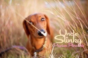Uncle Slinky Passion Photoshop Action by uncleslinky