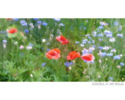 Flowers in the grass by love1008