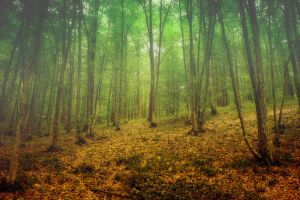 Forrest 1 by violety