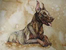 watercolour and coffee, doberman by LomovtsevaOlga