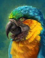 Parrot by Vylla