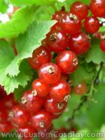Red currants by The-Cute-Storm