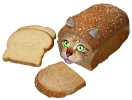 Cat Bread by kaname