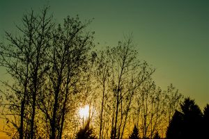 Sunset Trees by designerfied