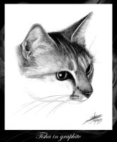 Tisha in graphite by gsb