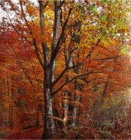 Autumn Colours by Callu