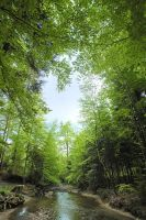 foret by ricchy