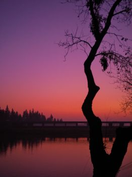 Hazy Purple Sunset by Marilyn958