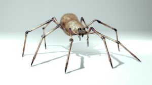3d spider by chronokidlinck