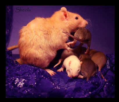 Mothers love by Sheols