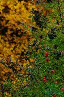 The colors of autumn by Seth890603