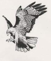 Red Tailed Hawk 2 by RamageArt