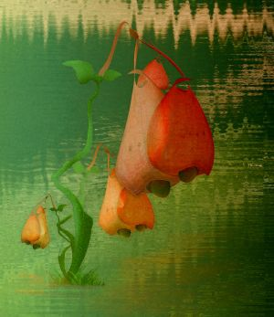 Bells by jennystokes