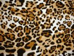 Leopard tex by Comacold-stock