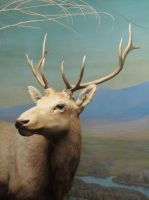 Taxidermy 10 by chamberstock