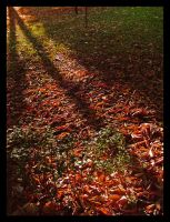 Autumn Leaves 4 by Maverick900407
