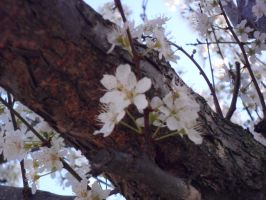 Plum tree 4 by Haruka88Moon