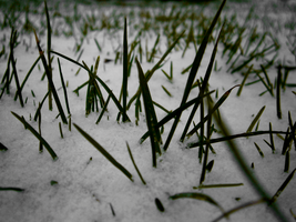 Grass with snow by BerryKiller